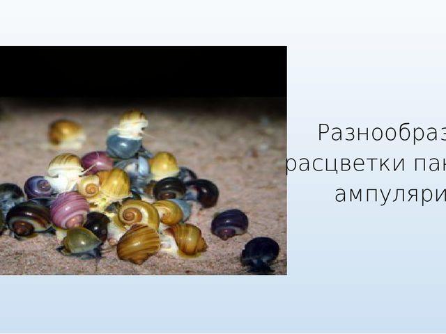 Разнообразие расцветки панциря ампулярии