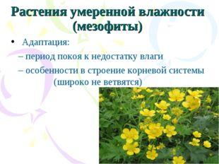Растения умеренной влажности (мезофиты) Адаптация: – период покоя к недостат