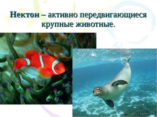Нектон – активно передвигающиеся крупные животные.