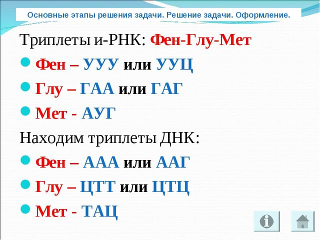 Триплеты и-РНК: Фен-Глу-Мет Фен – УУУ или УУЦ Глу – ГАА или ГАГ Мет - АУГ Нах...