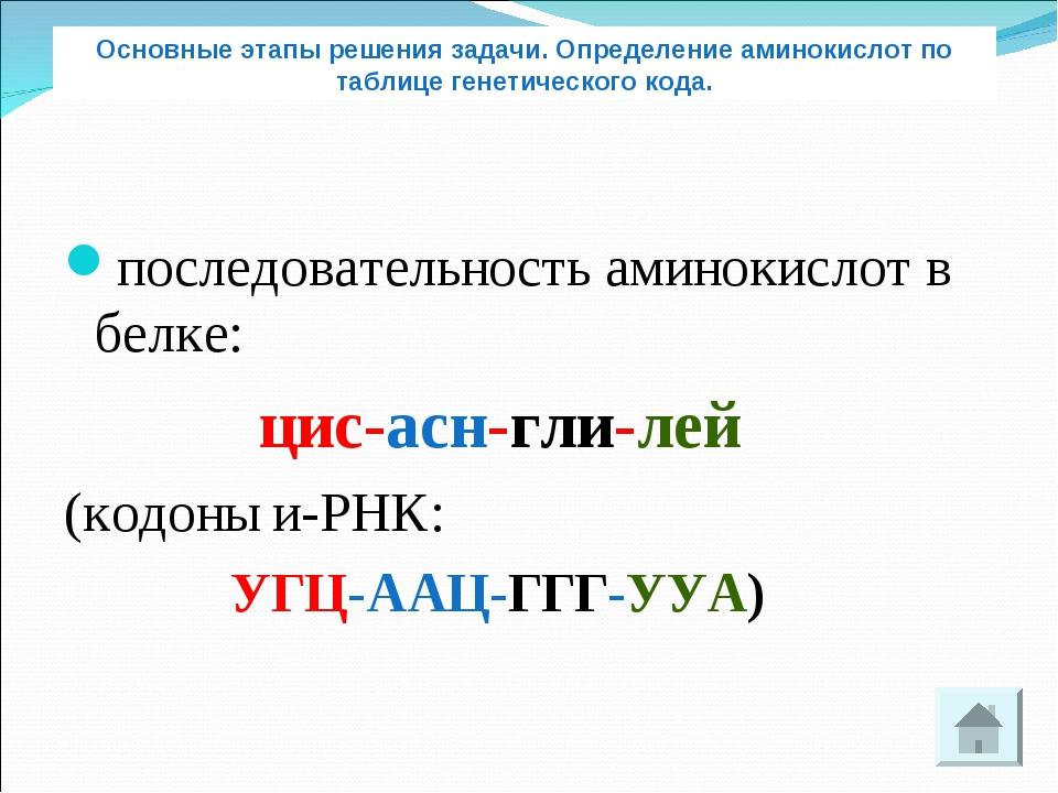 последовательность аминокислот в белке: цис-асн-гли-лей (кодоны и-РНК: УГЦ-АА...