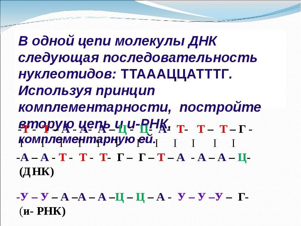В одной цепи молекулы ДНК следующая последовательность нуклеотидов: ТТАААЦЦАТ...
