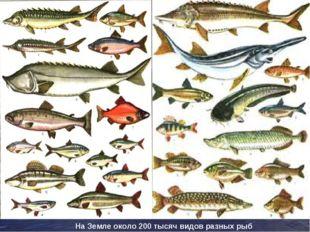 На Земле около 200 тысяч видов разных рыб