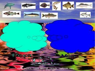 Акула, сом, камбала, щука, карась, судак, минтай, сельдь, горбуша, лещ.