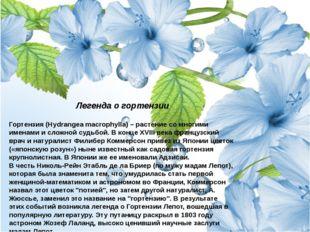 Легенда о гортензии Гортензия (Hydrangea macrophylla) – растение со многими