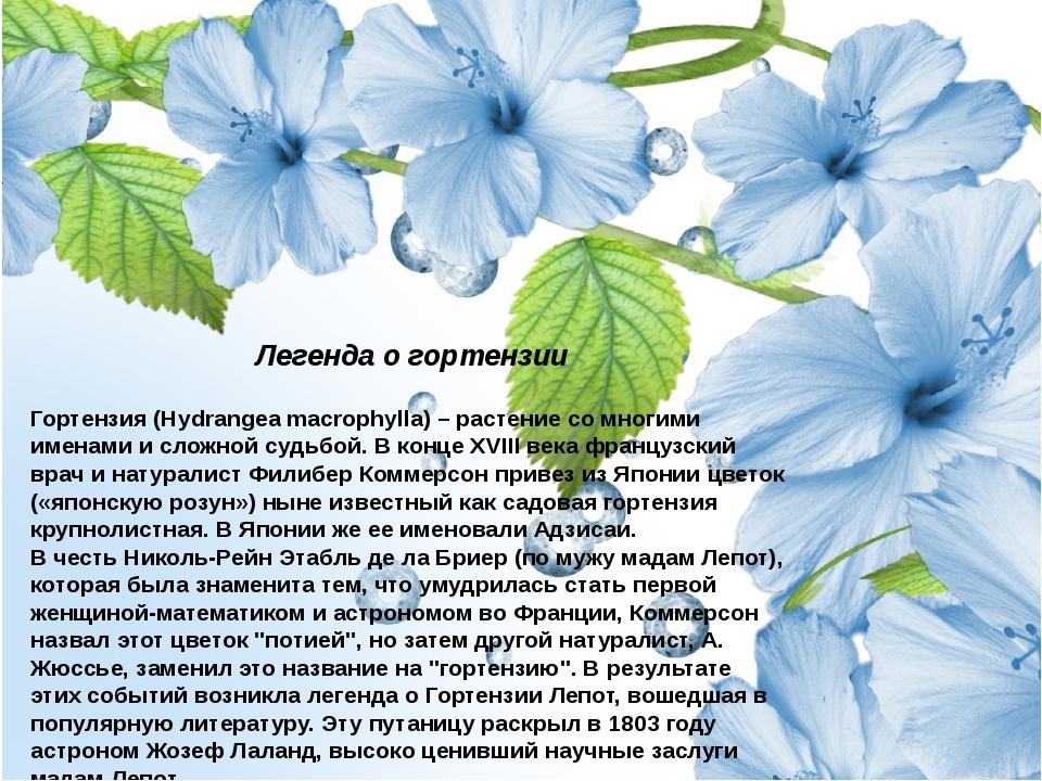 Легенда о гортензии Гортензия (Hydrangea macrophylla) – растение со многими...