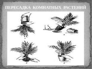 ПЕРЕСАДКА КОМНАТНЫХ РАСТЕНИЙ Аккуратно достать растение Осмотреть земляной к