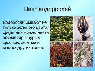 Цвет водорослей Водоросли бывают не только зелёного цвета: среди них можно на