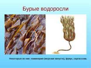 Бурые водоросли Некоторые из них: ламинария (морская капуста), фукус, саргасс