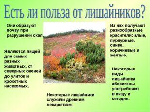 Они образуют почву при разрушении скал. Являются пищей для самых разных живот