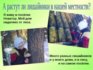 Я живу в посёлке Новатор. Мой дом недалеко от леса. Много разных лишайников и