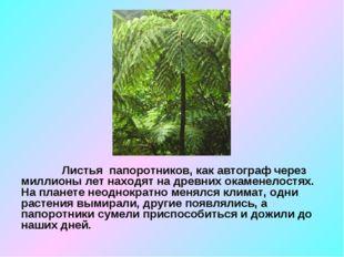 Листья папоротников, как автограф через миллионы лет находят на древних окам