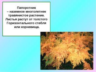 Папоротник – наземное многолетнее травянистое растение. Листья растут от толс