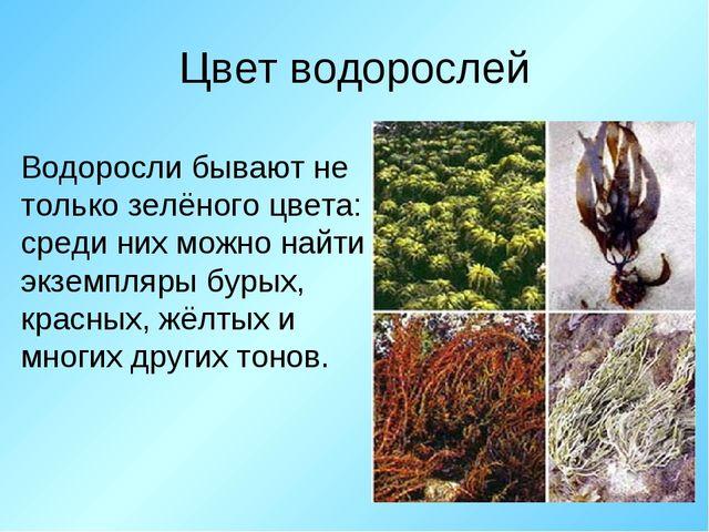 Цвет водорослей Водоросли бывают не только зелёного цвета: среди них можно на...