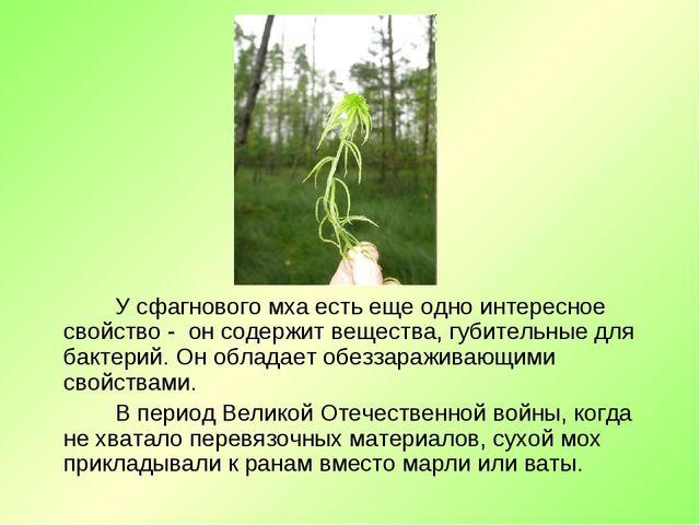 У сфагнового мха есть еще одно интересное свойство - он содержит вещества, г...