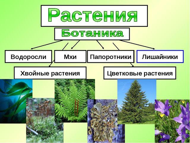 Водоросли Мхи Лишайники Папоротники Хвойные растения Цветковые растения