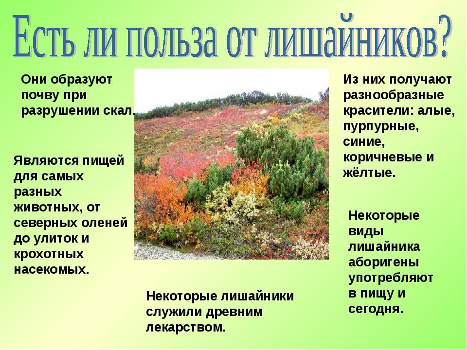 Они образуют почву при разрушении скал. Являются пищей для самых разных живот...