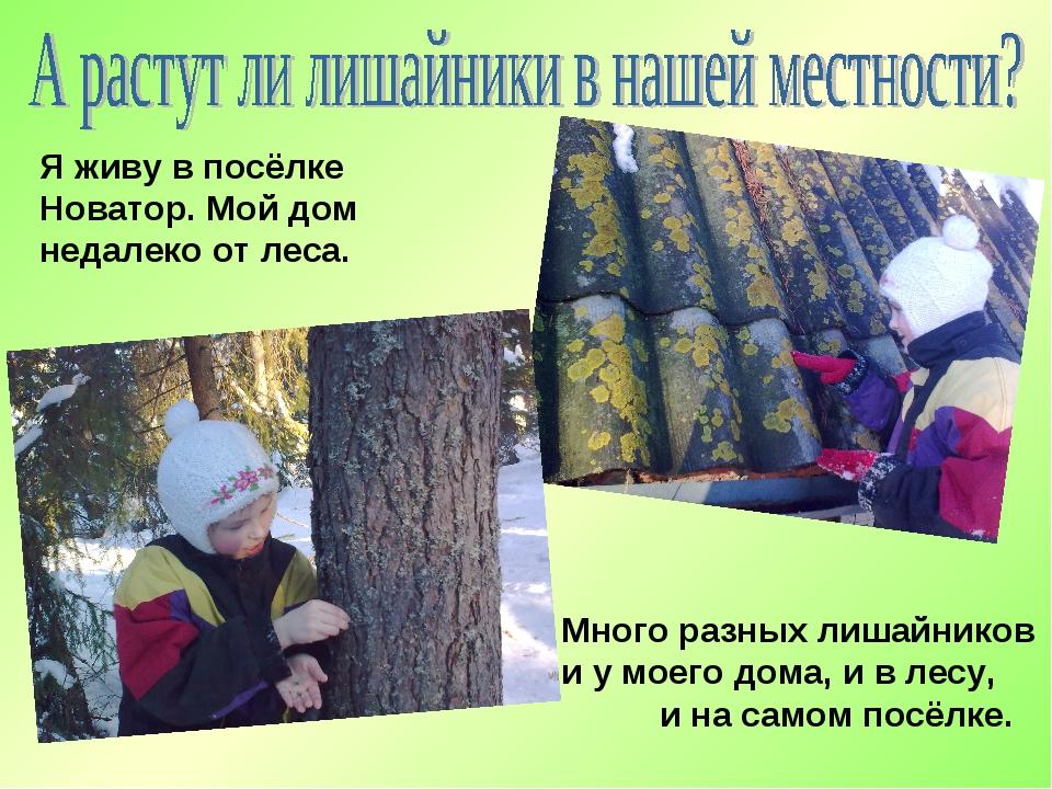 Я живу в посёлке Новатор. Мой дом недалеко от леса. Много разных лишайников и...