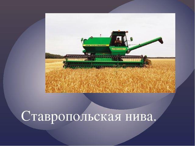 Ставропольская нива.
