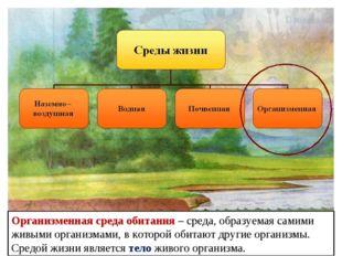 Организменная среда обитания – среда, образуемая самими живыми организмами, в