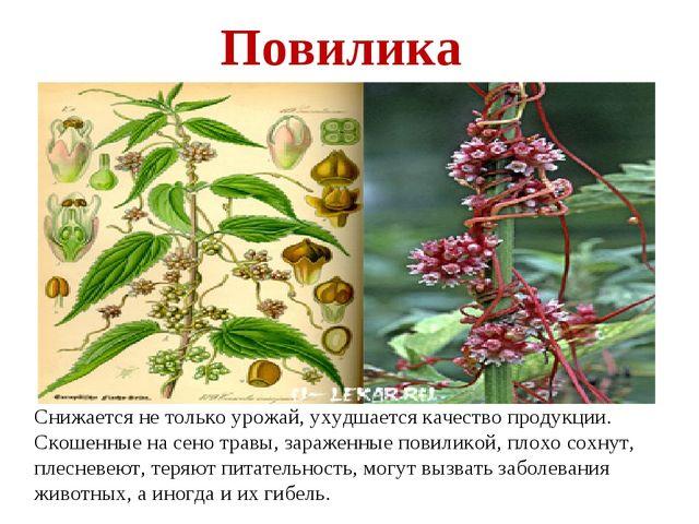 Снижается не только урожай, ухудшается качество продукции. Скошенные на сено...