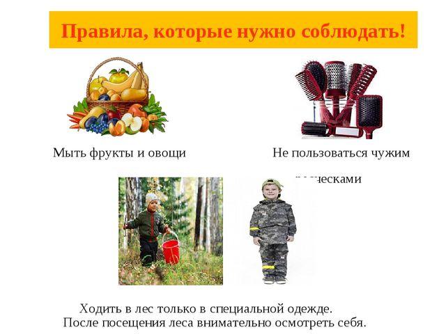 Мыть фрукты и овощи Не пользоваться чужим расческами Ходить в лес только в с...