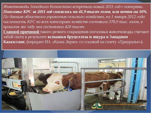 Животноводы Западного Казахстана встретили новый 2011 год с потерями. Поголов...