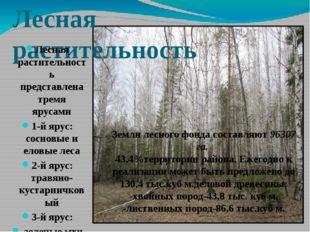 Лесная растительность Лесная растительность представлена тремя ярусами 1-й яр
