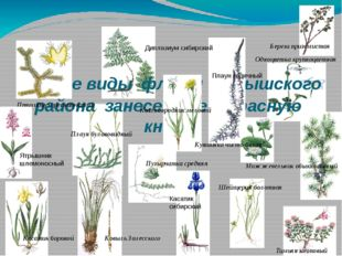 Редкие виды флоры Барышского района занесенные в Красную книгу Одноцветка