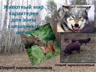 Отряд парнокопытные Животный мир характерен для зоны смешанных лесов Отряд па