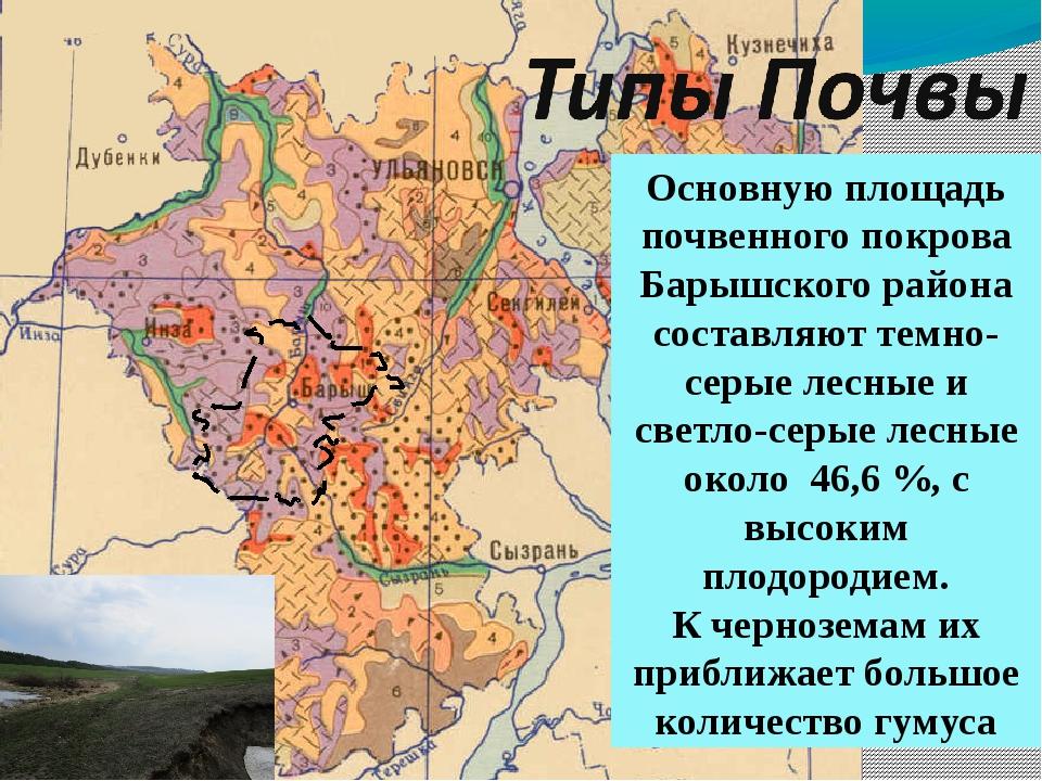 Основную площадь почвенного покрова Барышского района составляют темно-серые...