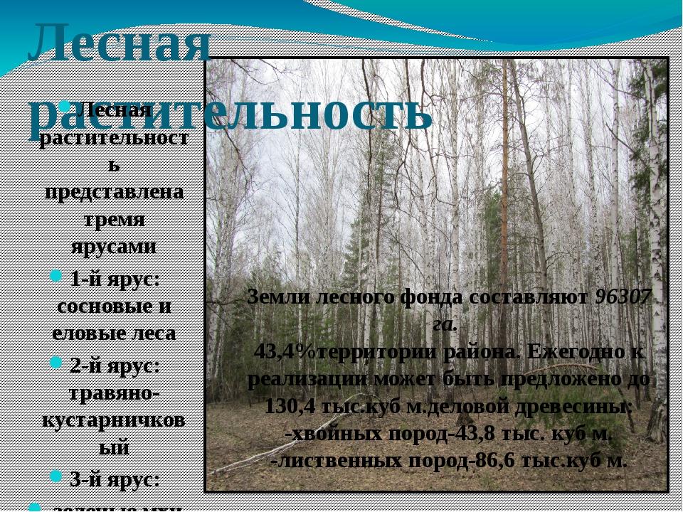 Лесная растительность Лесная растительность представлена тремя ярусами 1-й яр...