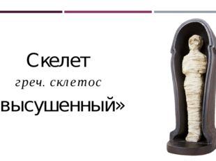 Cкелет греч. склетос «высушенный»