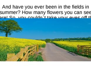 And have you ever been in the fields in summer? How many flowers you can see