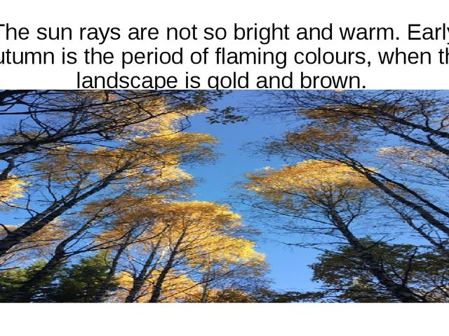 The sun rays are not so bright and warm. Early autumn is the period of flamin...
