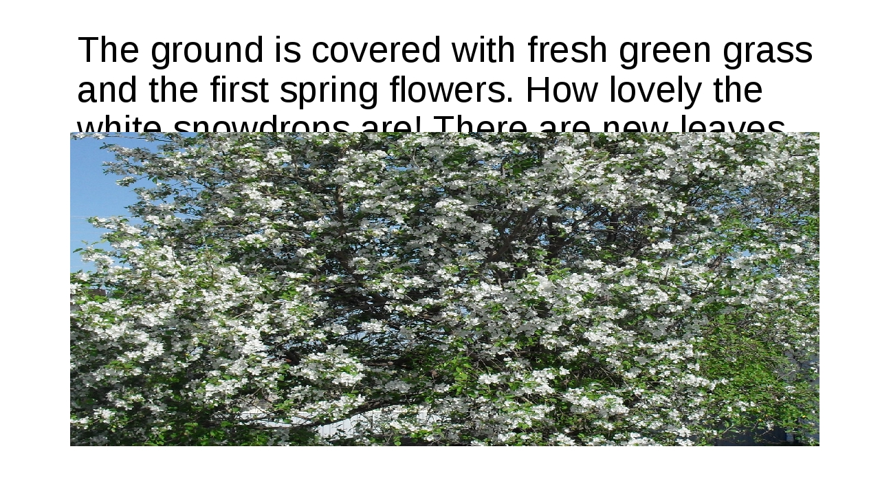 The ground is covered with fresh green grass and the first spring flowers. Ho...