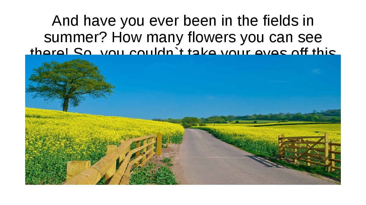 And have you ever been in the fields in summer? How many flowers you can see...