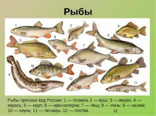 Рыбы Рыбы пресных вод России: 1 — голавль 2 — ерш; 3 — жерех; 4 — карась; 5 —
