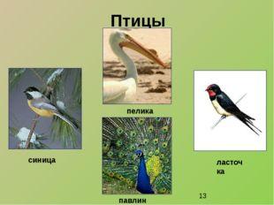 Птицы пеликан синица павлин ласточка