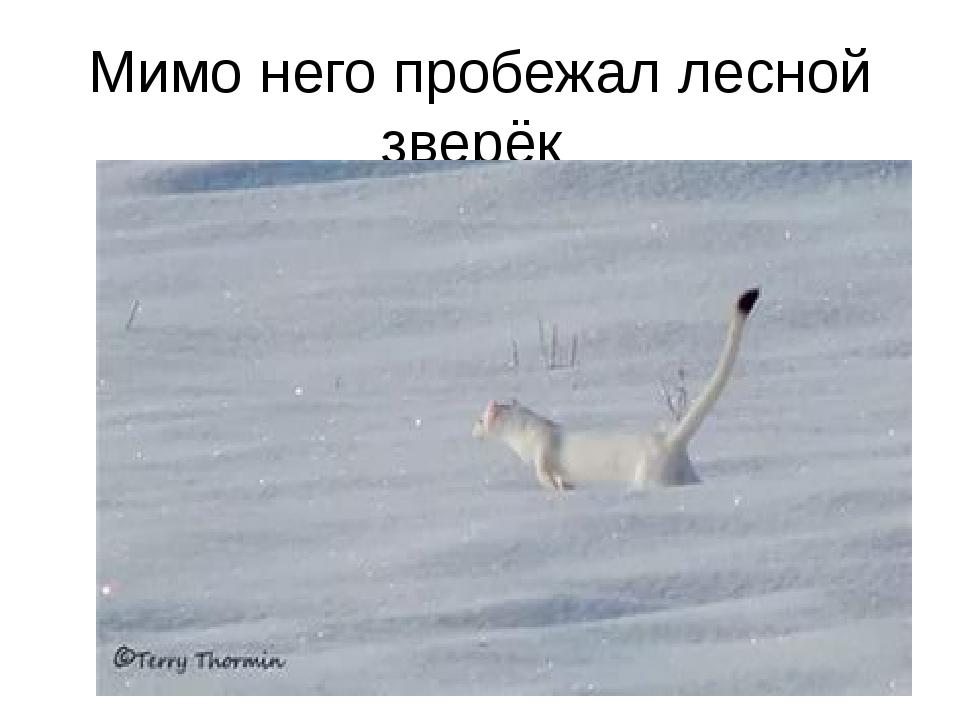 Мимо него пробежал лесной зверёк