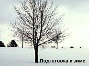 Подготовка к зиме.