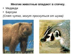 Многие животные впадают в спячку. Медведи Барсуки (Спят чутко, могут проснут