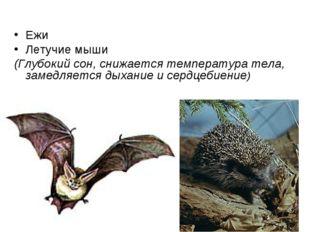 Ежи Летучие мыши (Глубокий сон, снижается температура тела, замедляется дыхан