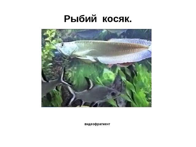 Рыбий косяк. видеофрагмент