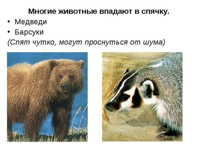 Многие животные впадают в спячку. Медведи Барсуки (Спят чутко, могут проснут...