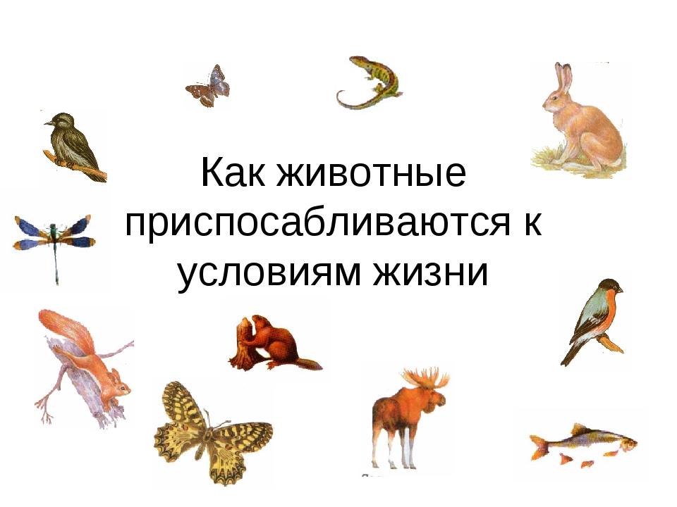 Как животные приспосабливаются к условиям жизни