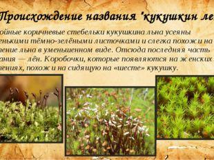 """Происхождение названия """"кукушкин лен"""". Стройные коричневые стебельки кукушкин"""