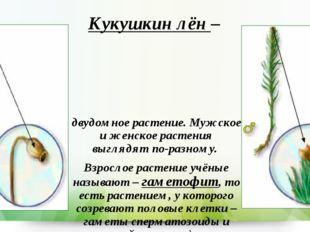 Кукушкин лён – двудомное растение. Мужское и женское растения выглядят по-раз