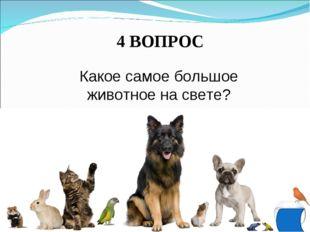 4 ВОПРОС Какое самое большое животное на свете?