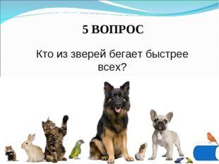 5 ВОПРОС Кто из зверей бегает быстрее всех?